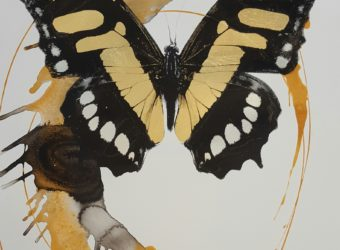 butterfly-paper